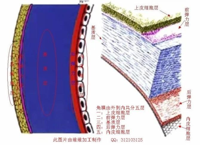 【维维编辑】初识角膜|养生保健-地宝网