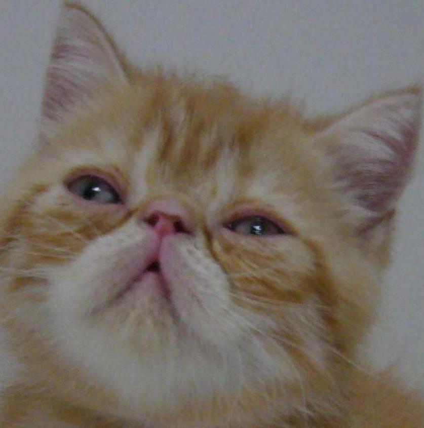动态猫咪图片大全可爱加菲猫